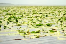 Skadarské jazero