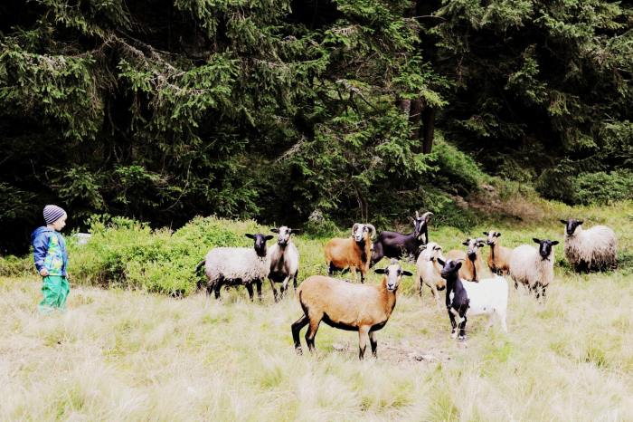 Tobi a kozy
